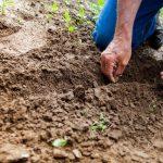 Agricoltura biologica: logica della vita, logica dell'ambiente