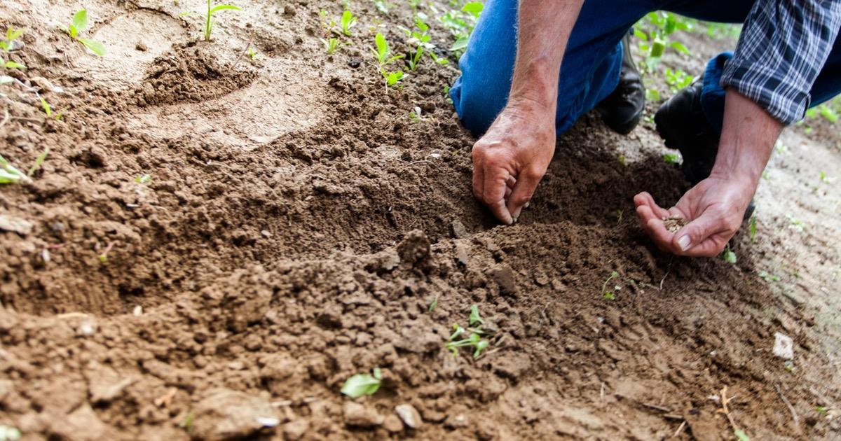 Coltivazione biologica salvezza per uomo e ambiente
