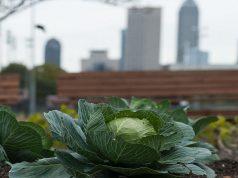 Coltivare in città tutta la frutta e verdura di cui si ha bisogno: l'esempio di Todmorden
