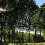Bonificare i siti inquinati con gli alberi