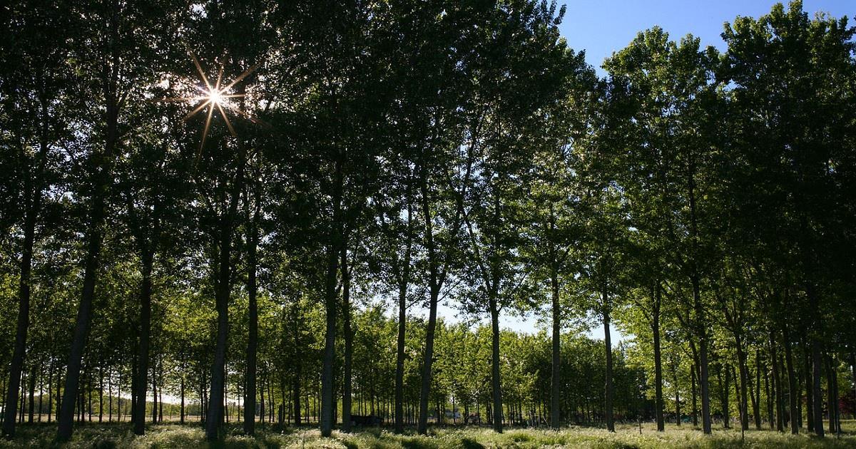 Bonificare i terreni inquinati con piante e alberi