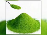 alga clorella