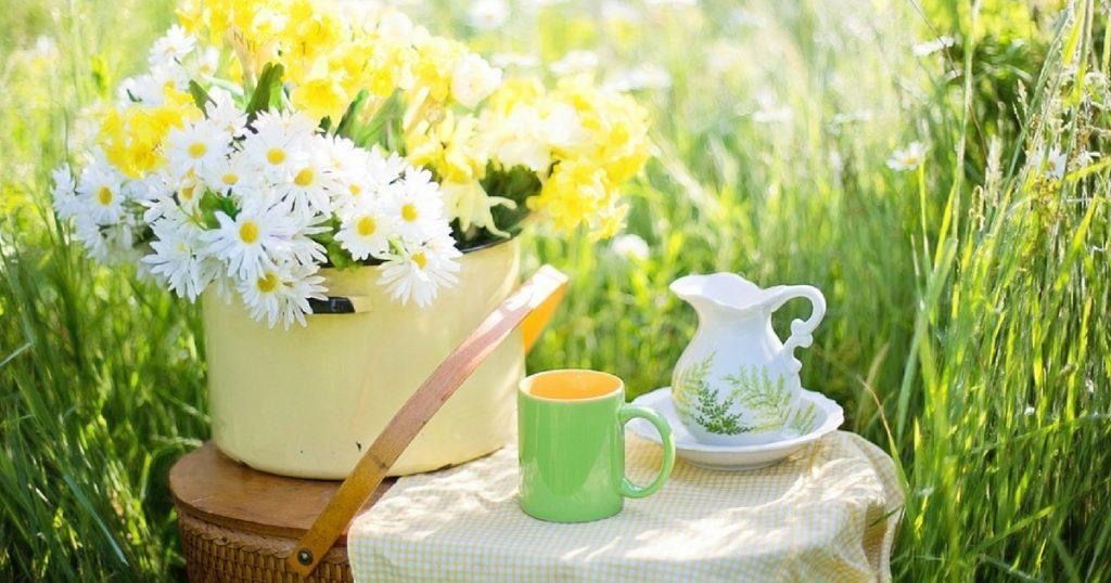 tè verde antinfiammatori grasso addominale