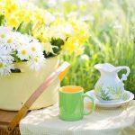 Combatti l'invecchiamento con il tè verde, elisir naturale di giovinezza