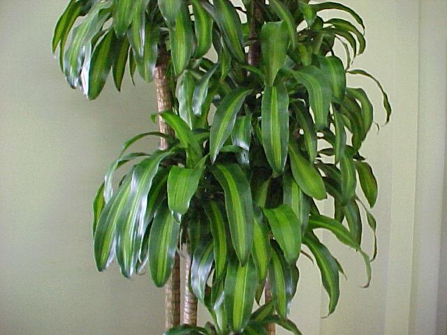 Pianta Camera Da Letto Ossigeno : Le piante che danno ossigeno nelle nostre case