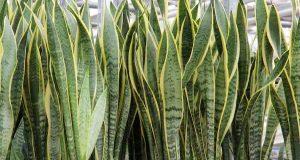 piante che danno ossigeno