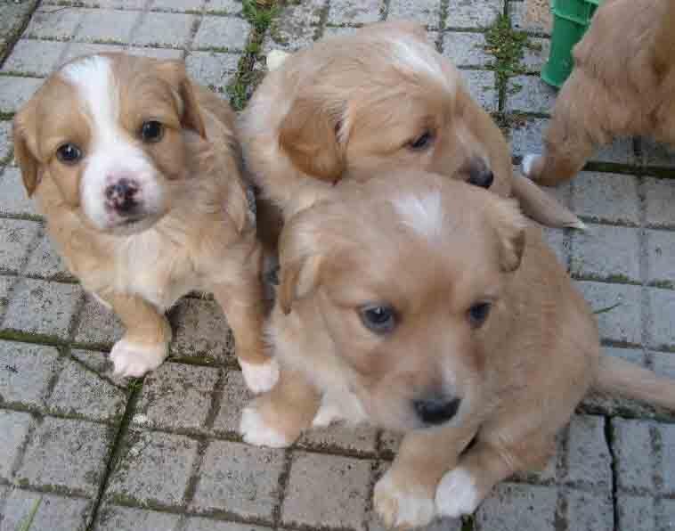 rimedi contro le pulci dei cani