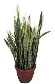 le piante che danno ossigeno nelle nostre case