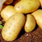 La top ten degli alimenti che contengono potassio