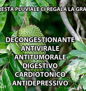 graviola1