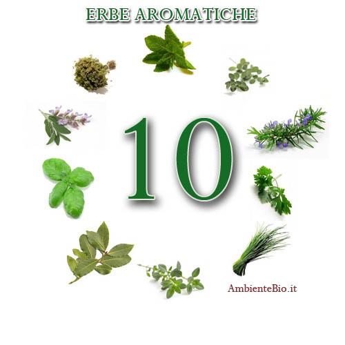 Erbe aromatiche coltivate in casa ambiente bio - Erbe aromatiche in casa ...