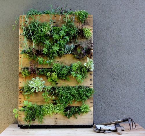 Realizzare un giardino verticale ambiente bio - Come realizzare un giardino verticale ...