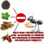 Consigli naturali per allontanare le formiche da casa e giardino