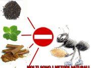 allontanare le formiche
