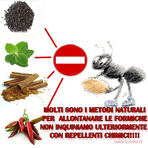 Consigli naturali per allontanare le formiche da casa e - Formiche in casa perche ...