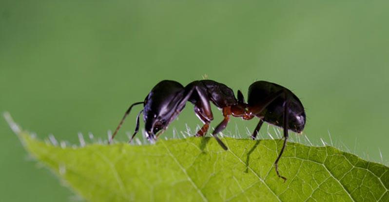 Le formiche prevedono i terremoti con largo anticipo ambiente bio - Formiche in casa ...