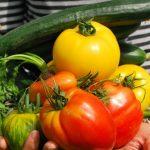 5 modi (completamente gratuiti) per coltivare ortaggi