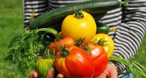 5 modi gratuiti per coltivare ortaggi