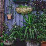 Combattere il caldo: 6 trucchi per salvare le vostre piante