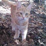 Come allontanare le pulci dai gatti in modo naturale e non tossico