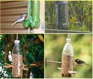 mangiatoia uccelli