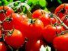 Allergia al nichel, quali alimenti evitare