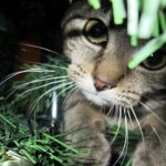 7 pericoli nascosti nelle nostre case e letali per i nostri animali