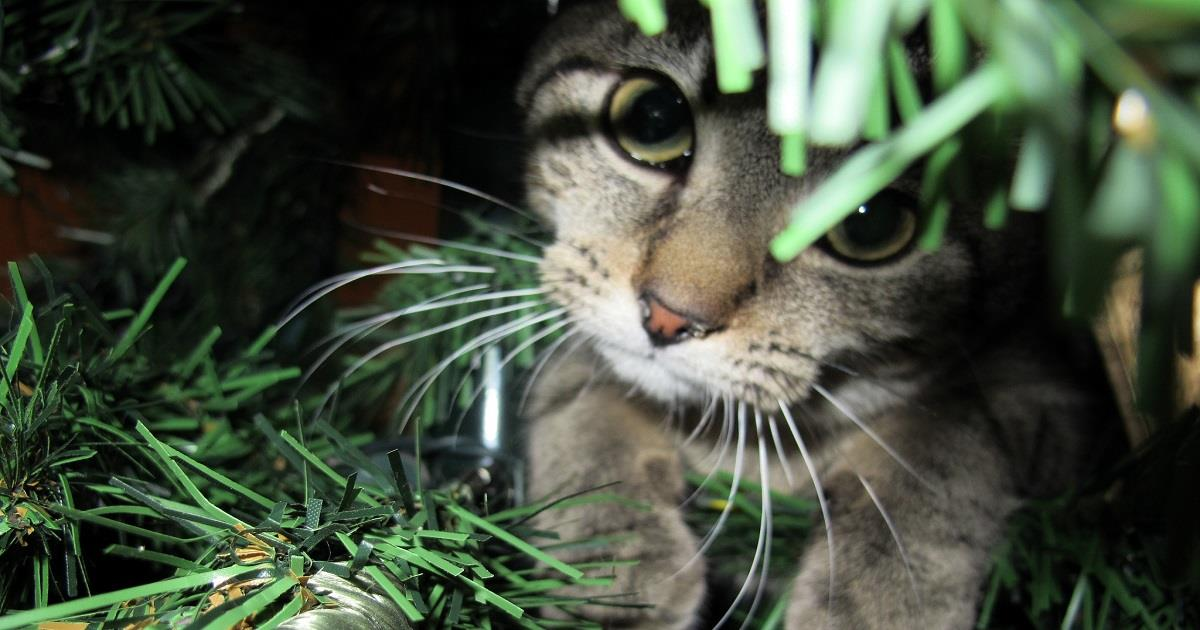 7 pericoli per i nostri animali nascosti in casa