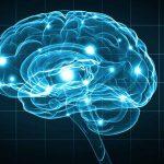 Quali sono i cibi utili per la memoria
