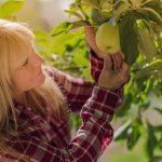 3 possibili ragioni per cui le piante da frutto non producono abbastanza