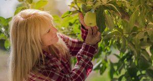 piante da frutto raccolto scarso rimedi
