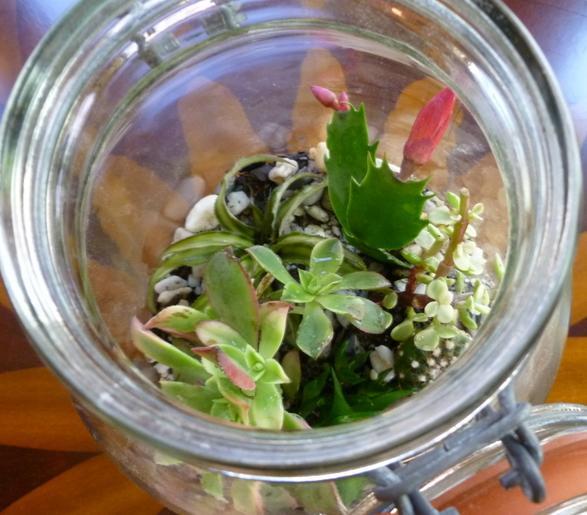Piante Grasse In Vetro.Come Trasformare Un Barattolo Di Vetro In Un Terrario Ambiente Bio