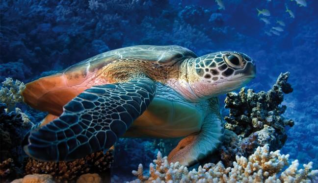 ogni anno muoiono 100mila esemplari di tartarughe marine