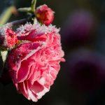 Come proteggere le piante dal freddo invernale