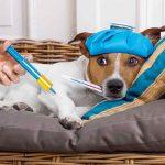 Protezione animali: come ripararli dal freddo