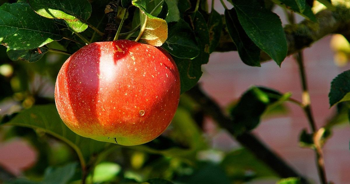 Come creare il proprio frutteto in casa