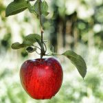 Gli scienziati confermano: una mela al giorno fa veramente vivere più a lungo