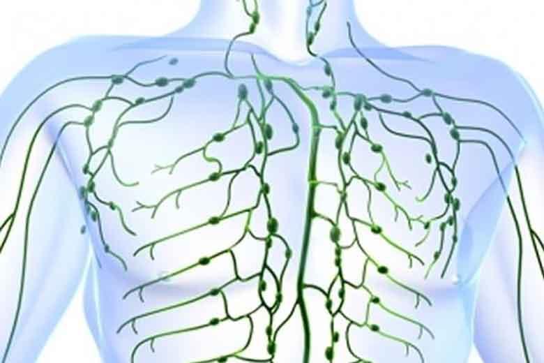 sistema linfatico e stretching