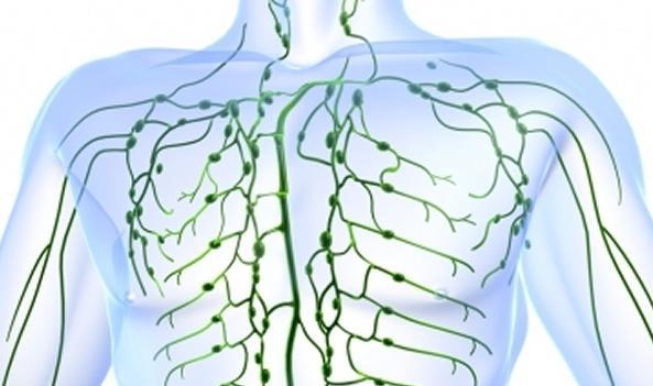come migliorare il sistema linfatico 10 metodi naturali per stimolare il sistema linfatico e migliorare la salute