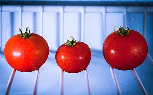 conservare i pomodori 7 alimenti che non dovrebbero essere conservati in frigo