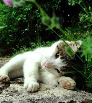 Piante e fiori velenosi per i nostri amici a 4 zampe for Piante velenose per i gatti