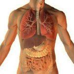 Apparato respiratorio: come rinforzarlo in modo naturale con timo, menta piperita, salvia e eucalipto