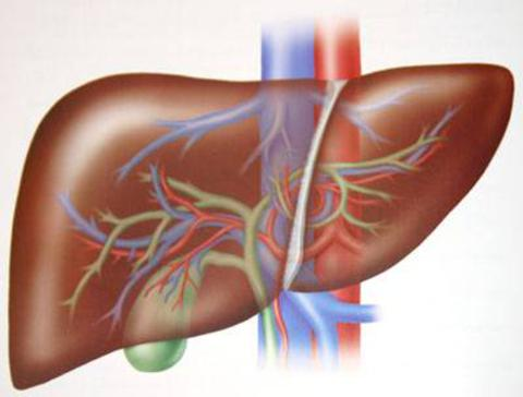 depurare il fegato