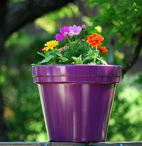 Orto in terrazza: cosa piantare in primavera | Ambiente Bio