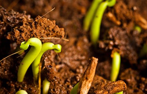 come fare un giardino