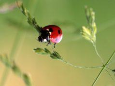 insetti buoni orto