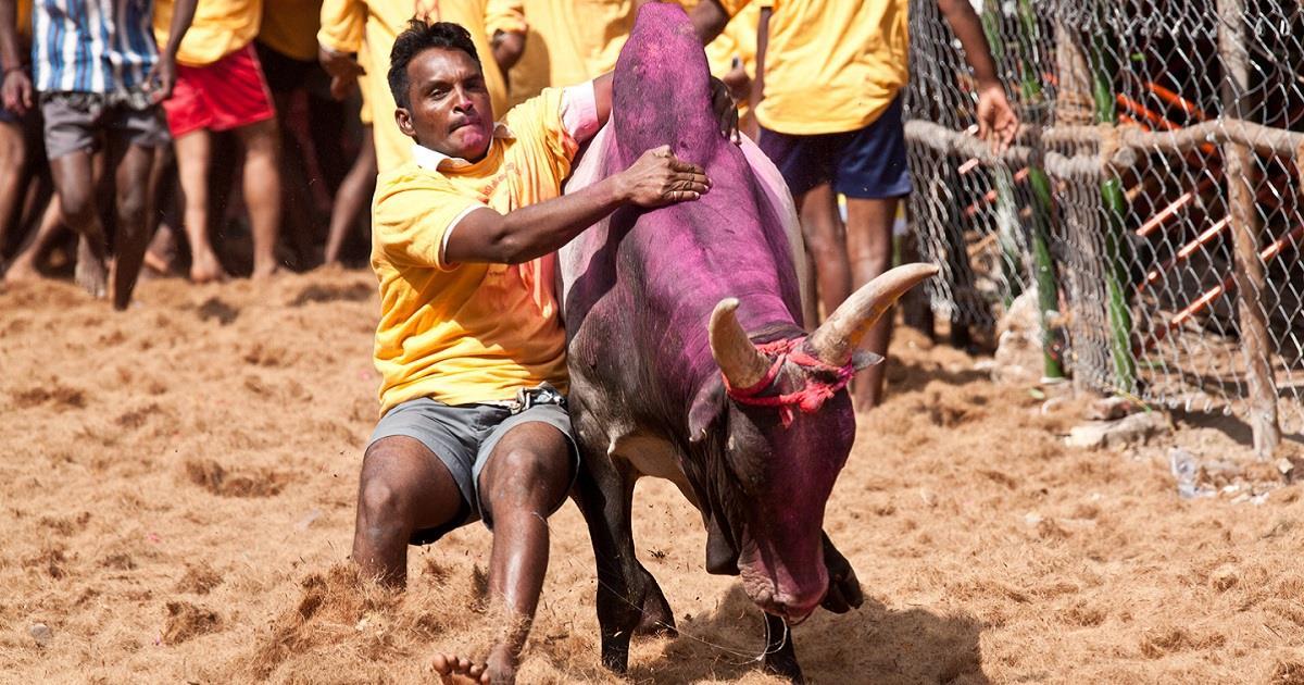 Bandite le corse degli animali in India
