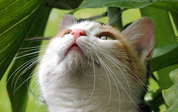 allontanare i gatti