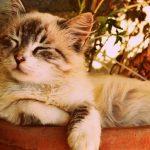 8 Rimedi per salvare le vostre piante dai gatti