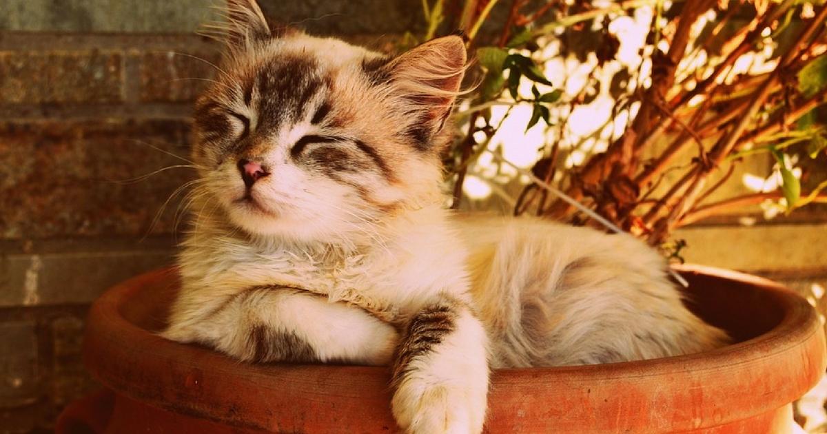 8 rimedi per salvare le vostre piante dai gatti ambiente bio for Piante velenose per i gatti